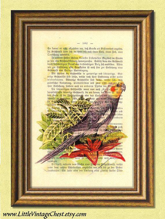 JON the COCKATIEL   Parrot   Parakeet  by littlevintagechest