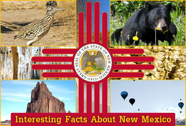 Interesting Facts About New Mexico https://mentalitch.com/interesting-facts-about-new-mexico/