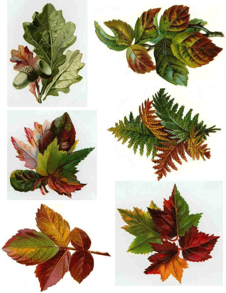 Free prim Collage Sheets for Pendants | Decoupage Paper Collage Sheets , Original Tissue, Vintage Fall Leaves