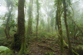 Santa Elena Nat. Park cloud forest sanctuary-Santa Elena Cloud Forest Reserve, North Puntarenas