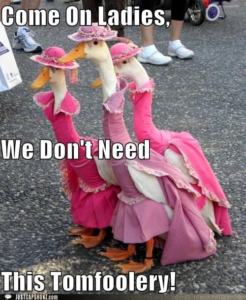 Cute!: Animals, Pet, Dress, Ducks, Funny, Pink, Things, Geese, Birds