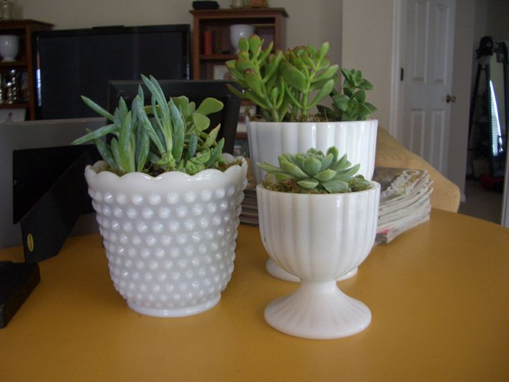 milk glass + succulents