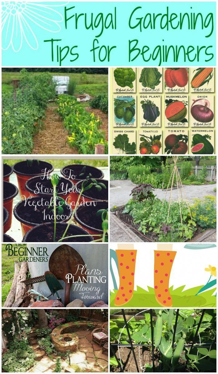 Helpful frugal gardening tips for beginners and anyone wanting to grow a garden …