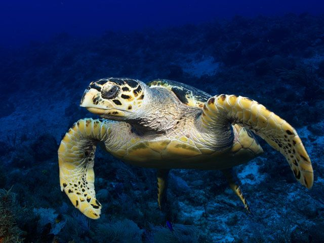 Underwater in Sodwana Bay, 7 mile reef! Astonishing!!