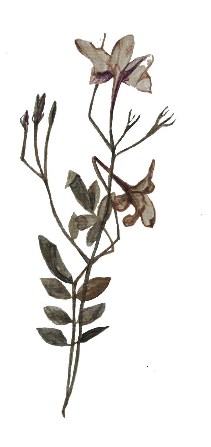watercolor dry jasmin