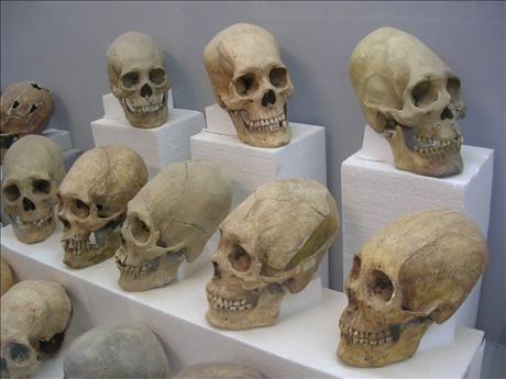 ¿Por qué los mayas deformaban sus cráneos? -  Ya hemos hablado en un artículo acerca de las similitudes entre los mayas y otros grandes pueblos (https://tuul.tv/articulo/cultura/diferencias-similitudes-egipcios-mayas-tuvieron-contacto),el día de hoy hablaremos de la mas interesante a nuestro parecer, la deformación del craneo.    Por mucho tiempo se pensó que esta práctica era por vanidad o para lucir mas imponentes, pero la verdad es que no es así, de hecho esta práctica era utilizada…