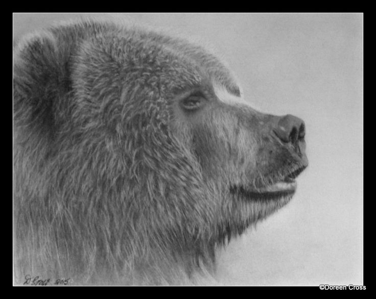 Grizzly Bear  -  Graphite