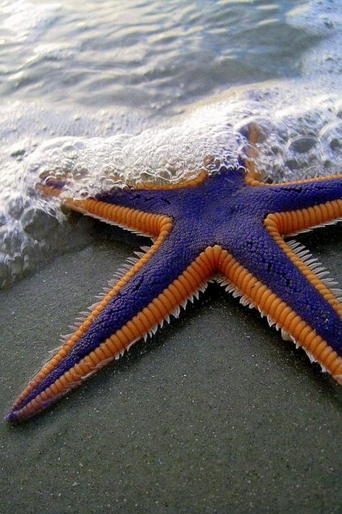 BUBBLES & purple starfish.
