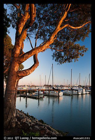 Municipal marina, Vallejo. San Pablo Bay, California, USA (color)