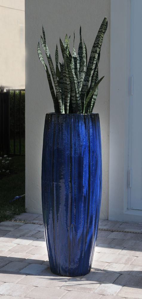 Pamela Crawford used cobalt blue planter to accent this Jupiter, Florida pool deck. See over 2000 photos of Palm Beach landscapes and container gardens suitable for south Florida on her web site, pamela-crawford.com. Pamela designs and installs landscapes throughout Palm Beach County, FL, including Boca Raton, Delray Beach, the town of Palm Beach, Palm Beach Gardens, Jupiter, and Wellington.