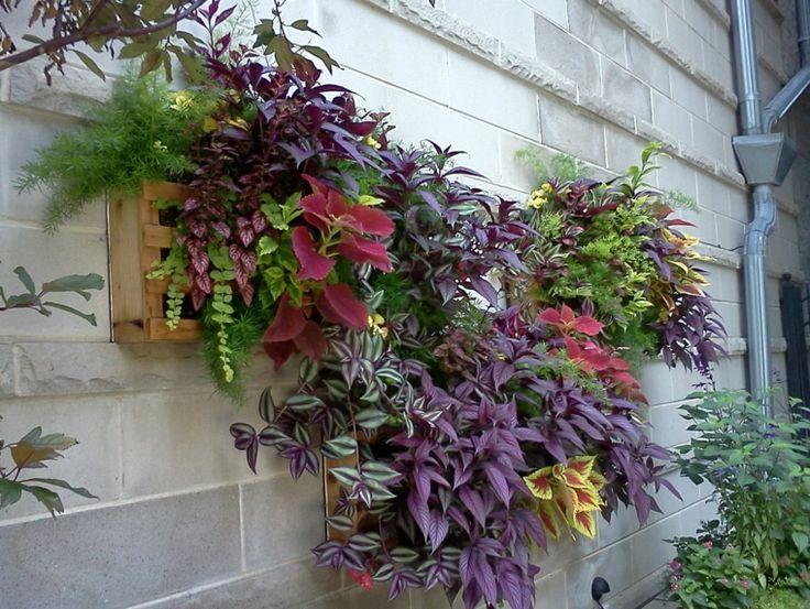 35 best jardin vertical elda salon de banquetes indalo for Ideas para colgar plantas