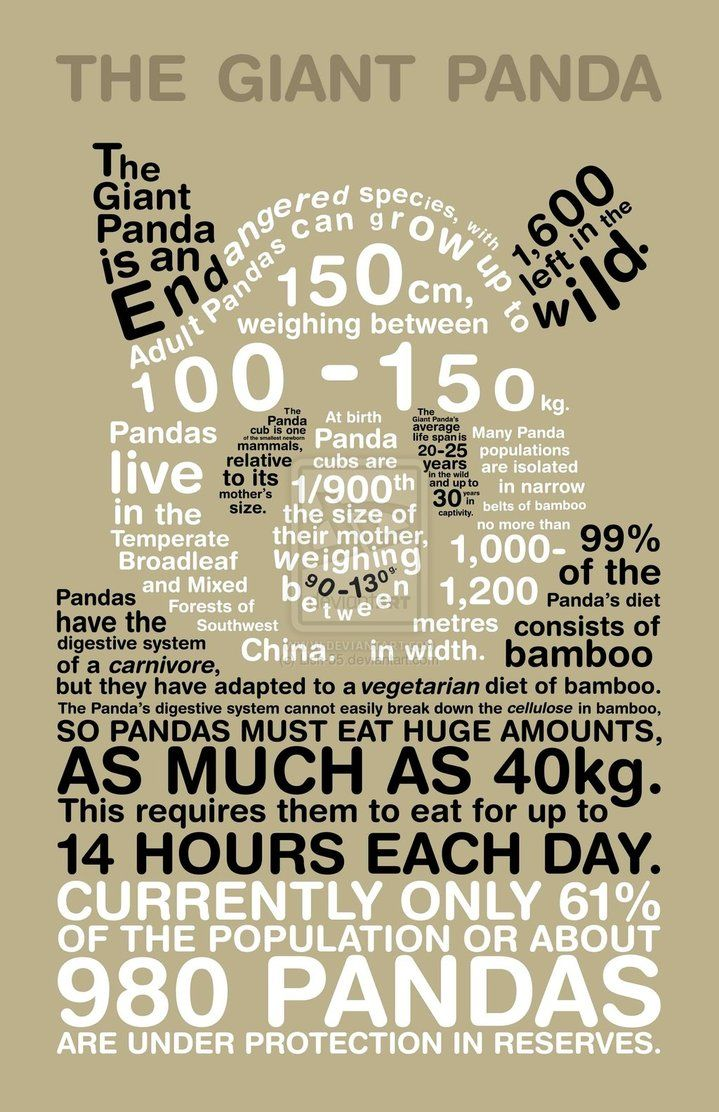 Facts of pandas shaped like a panda