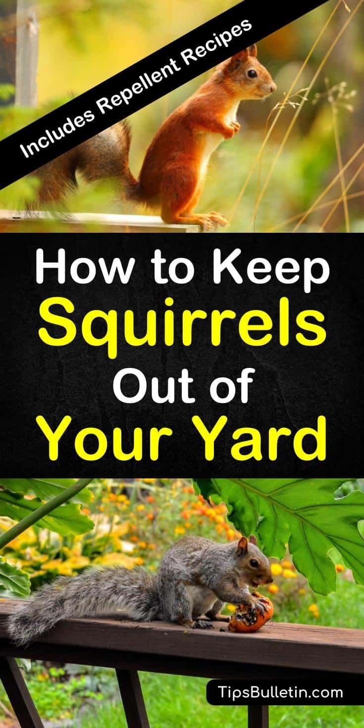 17 Incredibly Easy Ways To Keep Squirrels Out Of Your Yard Get Rid Of Squirrels Squirrel Repellant Squirrel