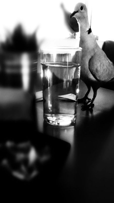 The Posing Pigeon! Photo by Lisa O'Sullivan -- National Geographic Your Shot