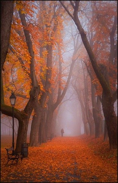 Foggy autumn trees