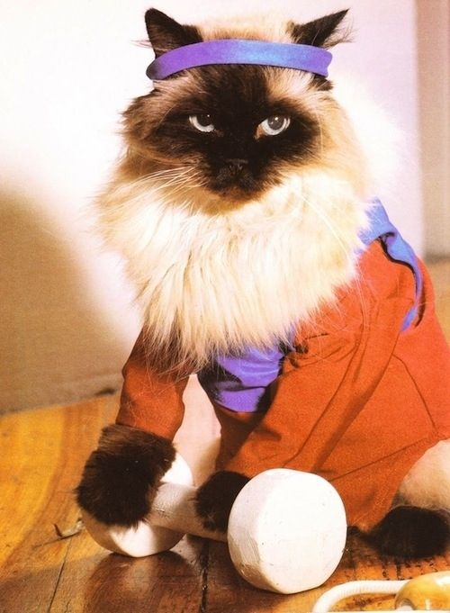 Awesome 80's Cat