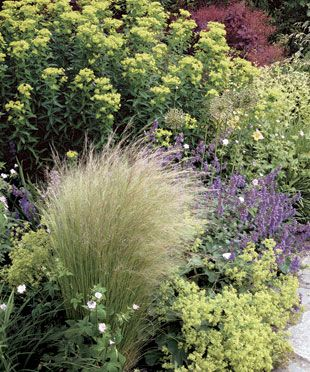 Best Hillside Plants Images On Pinterest Landscaping