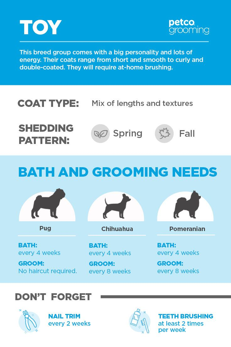 How Often Your Toy Breed Dog Should Be Bathed And Groomed Click