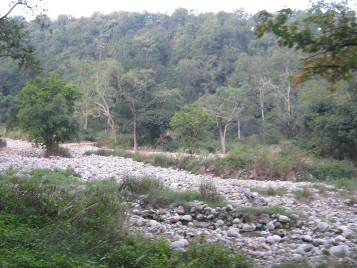 Jim Corbette National Park INDIA