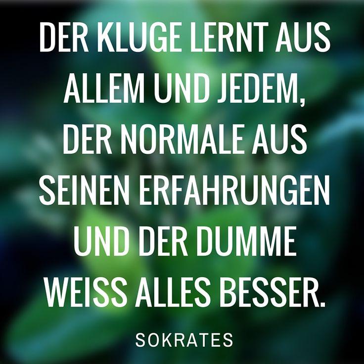 Der Kluge lernt aus allem und jedem, der Normale aus seinen Erfahrungen und der Dumme weiß alles besser. - Sokrates