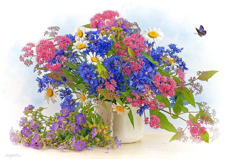 Открытки цветов полевых