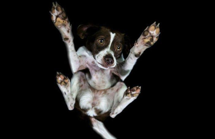 Wanneer je honden op glazen tafels van onderaf fotografeert