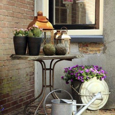 Jakie rośliny na balkon?