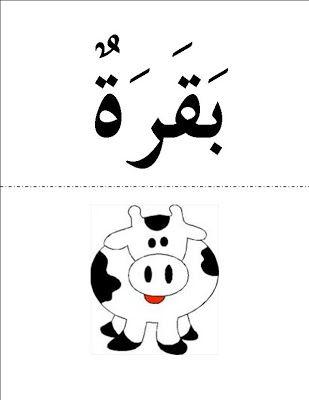 árabe cinta