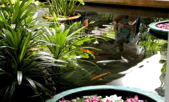 16 best images about aquaponics garden on pinterest for Koi pond aquaponics