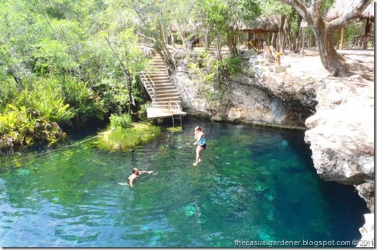 Cenote jard n de ed n swimming in a secret paradise in for Cancion en el jardin del eden