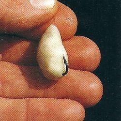 Brotteig als Angelköder ist sehr vielseitig und einfach zu verwenden, er bietet gegenüber anderen Brotködern wie Krume und Rinde einige Vorteile