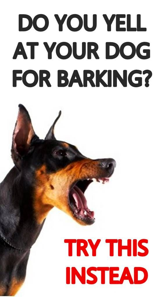 Does Your Dog Bark At Everything And Won T Stop Instead Of