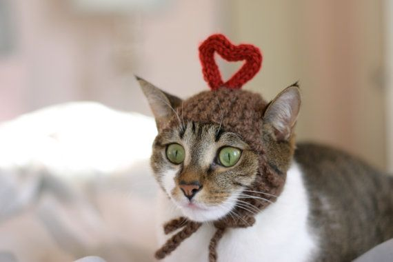 Valentine's cat ♥.: Cat Hats, Valentinesday Cat, Kitty Cat, Hats Valentines, Valentines Kitty, Hats Kitty, Heart Kitty, Valentines Gifts, Valentines Cat
