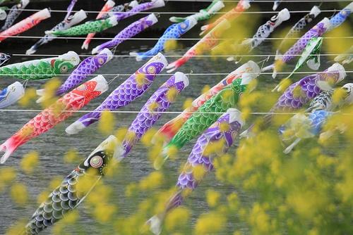 many carp-shaped streamers