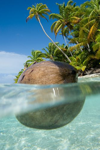 floating coconut