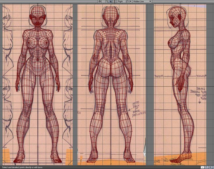 2d Character Design Pdf : Female body reference sheet google search topology