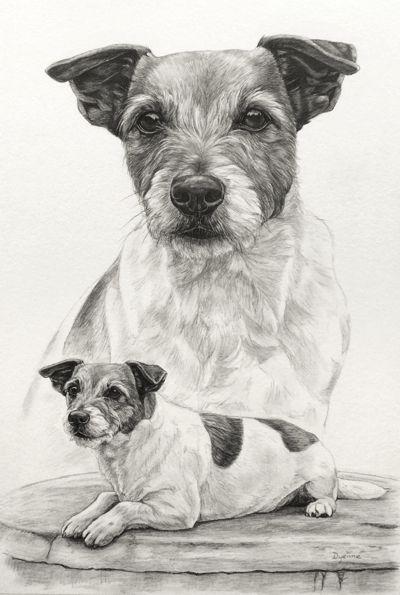 Jack Russel Terrier, Potlood tekening van hond in grafiet door Dyenne Nouwen