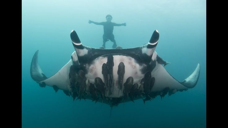 Amazing Ocean Animals Only Scuba Divers Can See