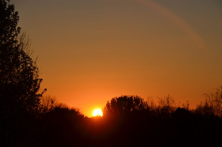 Sunset over trees   by David Daugherty