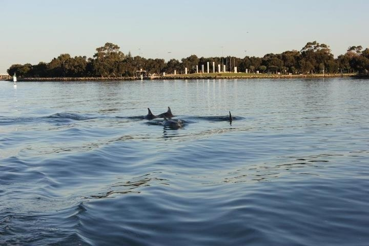 Mandurah Dolphins Western Australia
