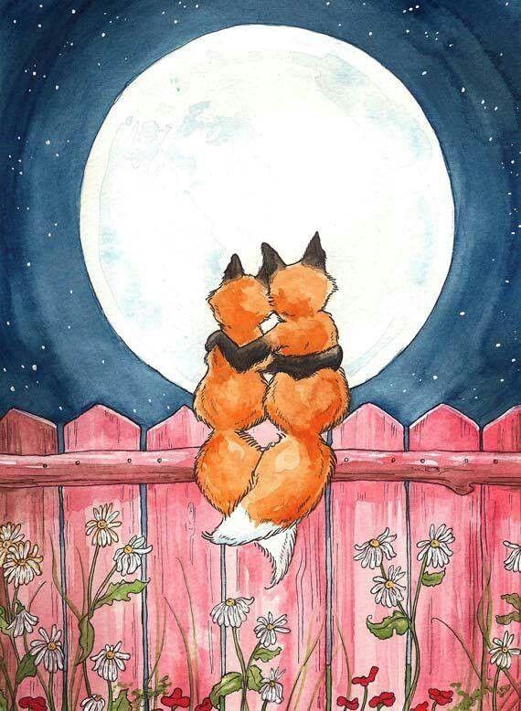 Fox night