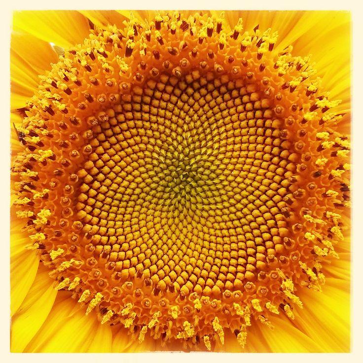 Sun by Raj Boora on 500px