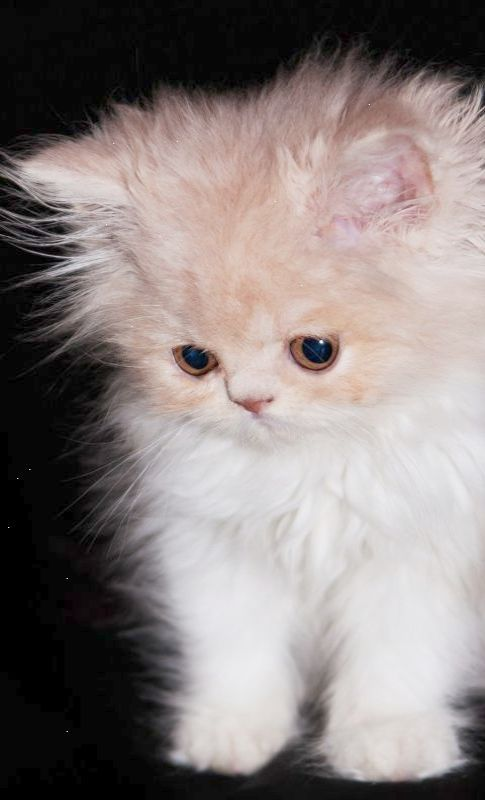 Now That S Neat Cutest Animals In The World List Kittens