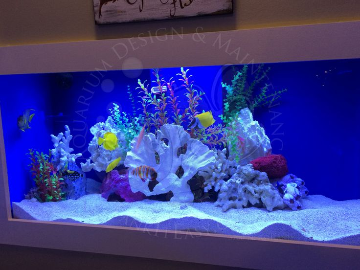 1000 images about saltwater reef aquarium fishes on for Fish only saltwater tank