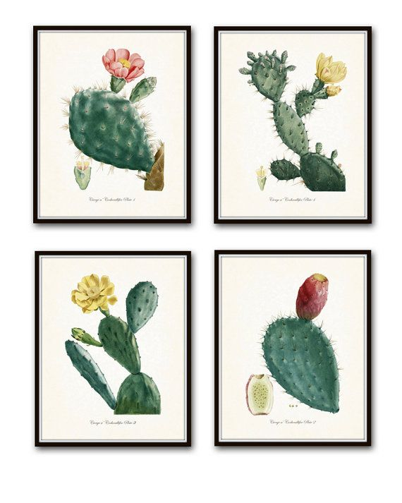 French Cactus Botanical Print Set No. 1 - Giclee Canvas Art Prints - Antique Botanical Prints - Wall Art - Prints - Posters - Desert Cactus