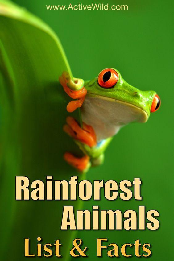 25+ best ideas about Rainforest animals list on Pinterest ...