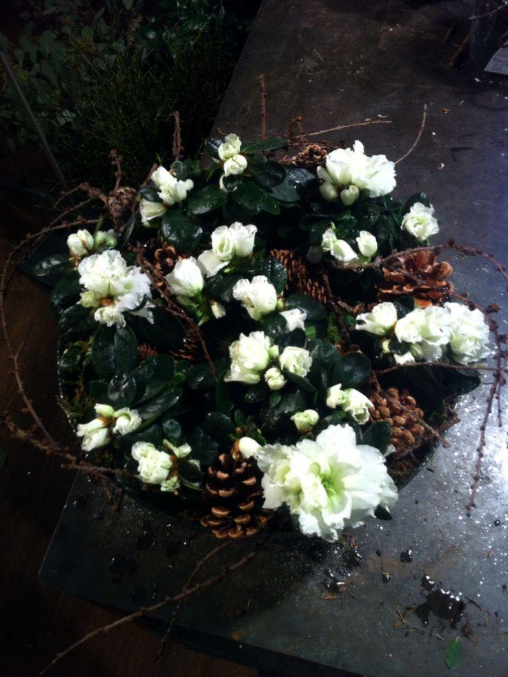 Sammenplantning med asalia, kongler, mose og kvister