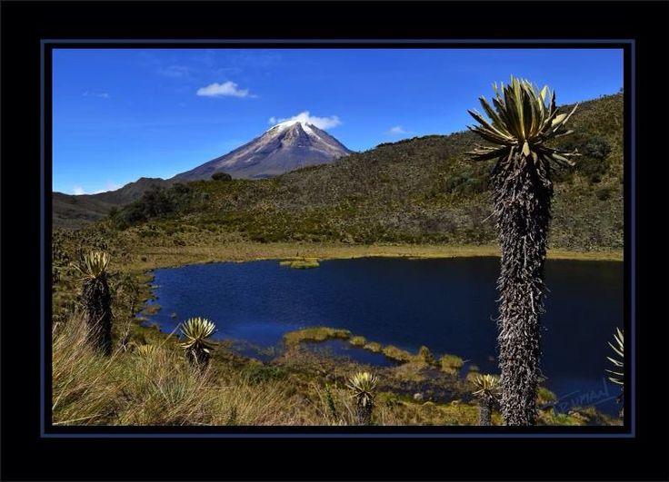 Valle de frailejones, parque de los nevados / nevado del Tolima
