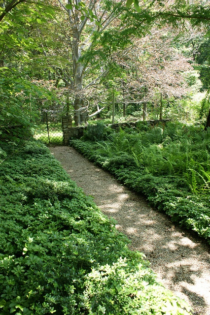 Do Ferns Grow Under Oak Trees : About outdoor ground cover on trees grasses and plants