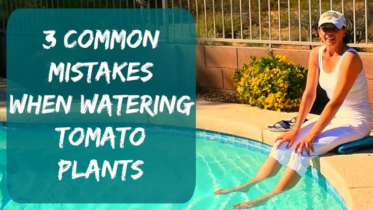 Watering Tomato Plants & Signs Of Overwatering - How To Water Tomatoes & Container Plants in Arizona - YouTube